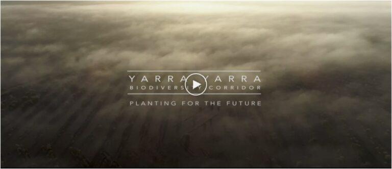 Yarra Yarra Biodiversity Corridor Project